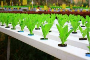 how-to-build-a-hydroponic-system-gardening-ideas-how-to-build-a-hydroponic-system